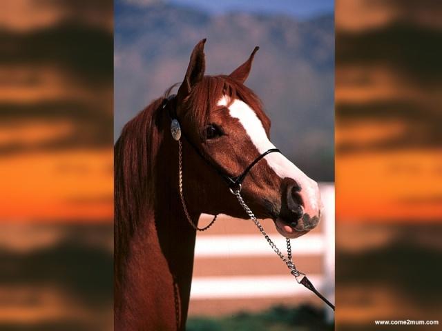 Nos amis les chevaux et poneys des Abymes