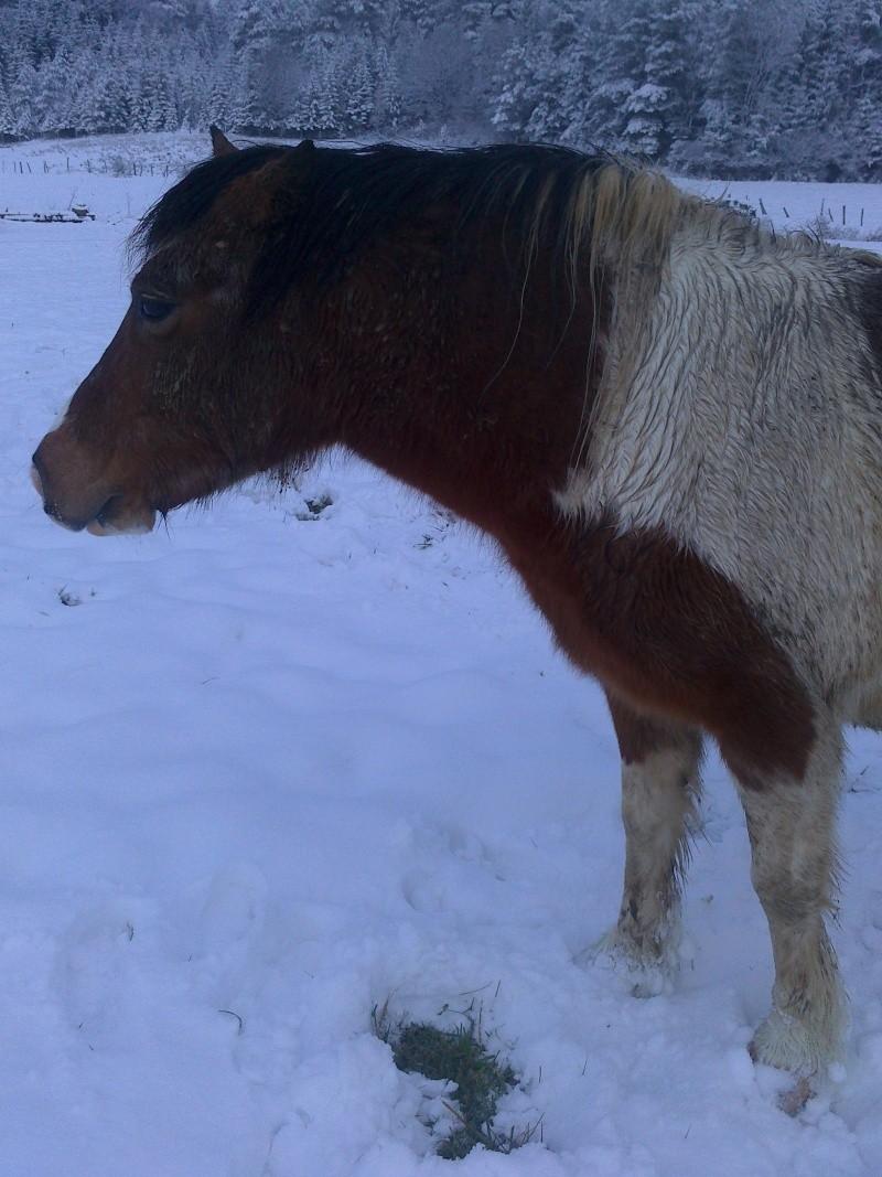 DUCc - ONC poney typé Shetland né en 1991 - adopté en mars 2015 par Joseph Duc_210