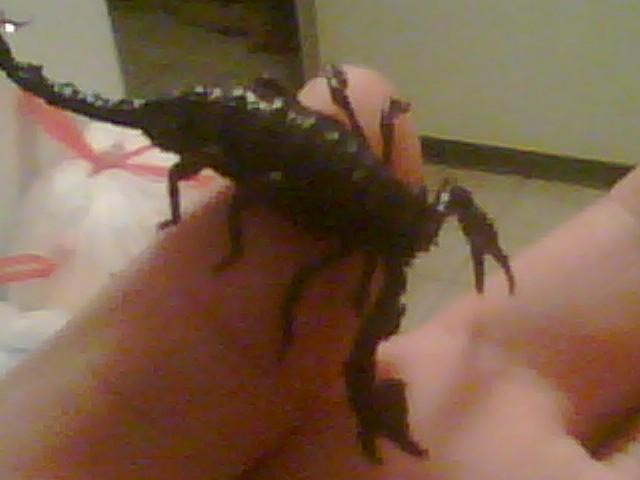 My Emperor Scorpion 10110710