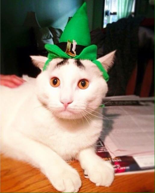 Happy Saint Patricks day! Sntpat10
