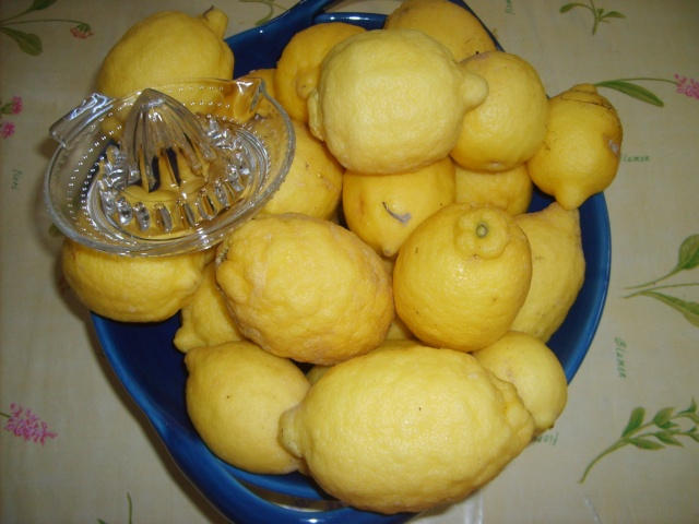 question sur les citronniers Photo_95