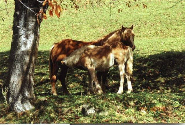 Konji16