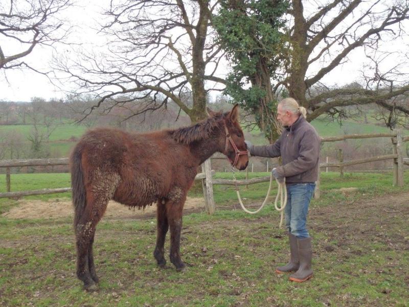 FALBALA - ONC mule née en 2015 - adoptée en juillet 2016 par Thierry 510