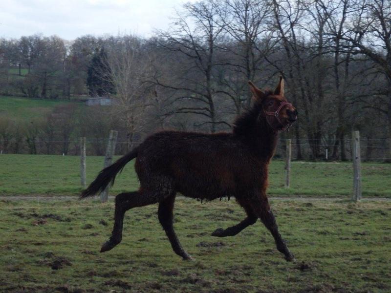 FALBALA - ONC mule née en 2015 - adoptée en juillet 2016 par Thierry Falbal11