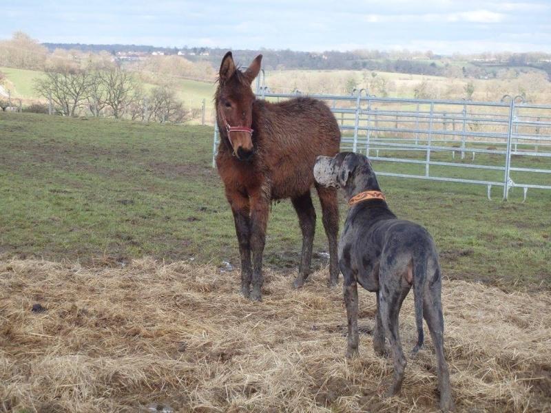 FALBALA - ONC mule née en 2015 - adoptée en juillet 2016 par Thierry Falbal12