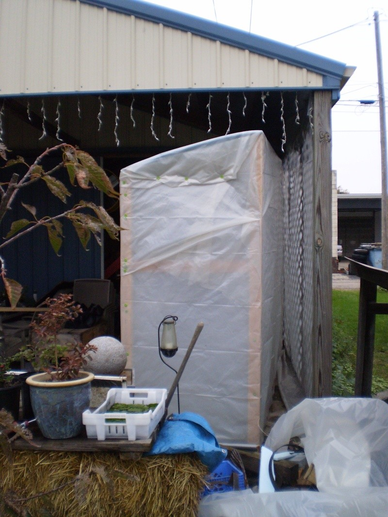 The Cold Frame Groweth Pa120013