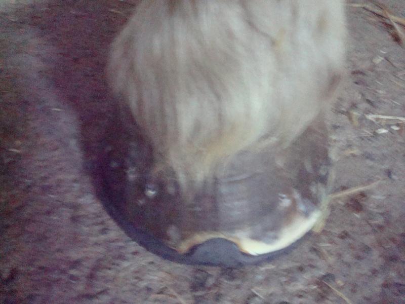 POLKA - cheval de Trait  née en 1984 - adoptée en janvier 2010 par asa  - Page 4 Dsc00616