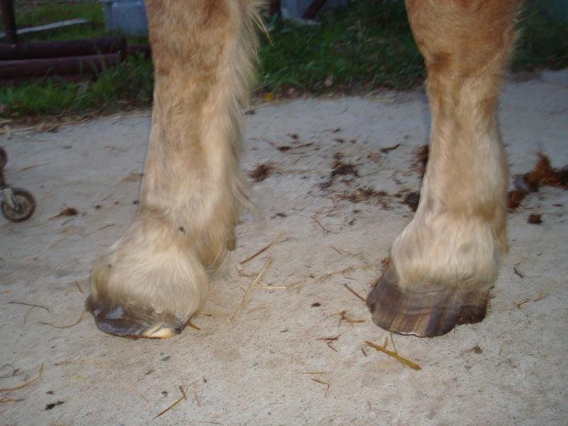 POLKA - cheval de Trait  née en 1984 - adoptée en janvier 2010 par asa  - Page 4 Dsc00617