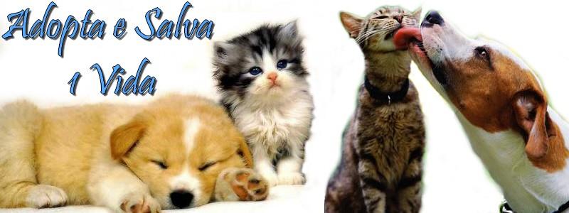 Adopta e salva uma vida