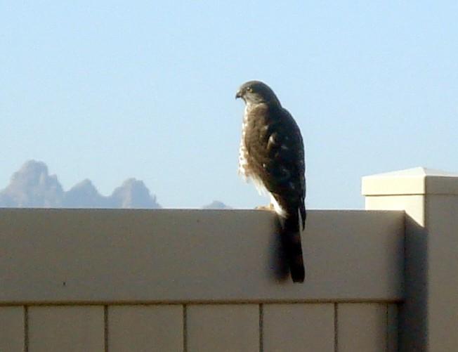 Make him GO away~ FAR far away! Hawk_010