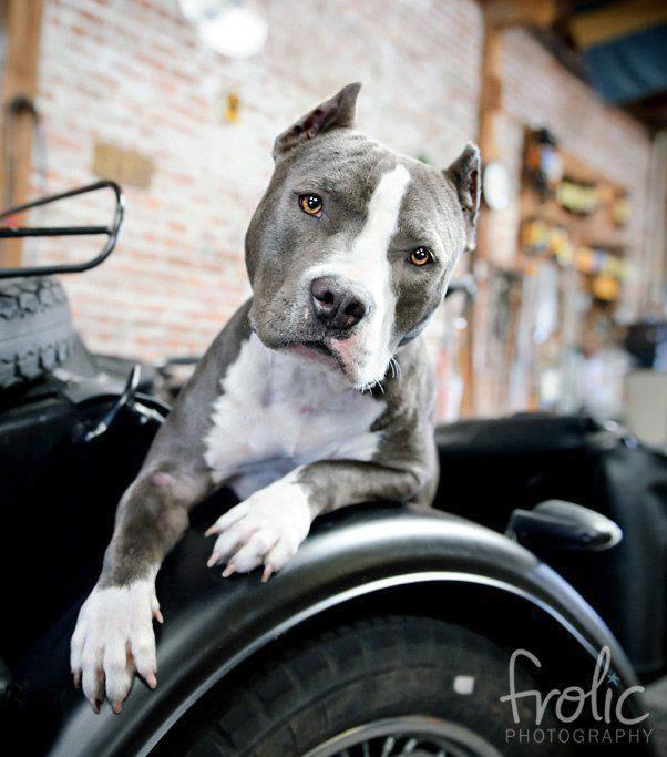 DOG'S & BIKES ATTITUDES - Page 3 12294811