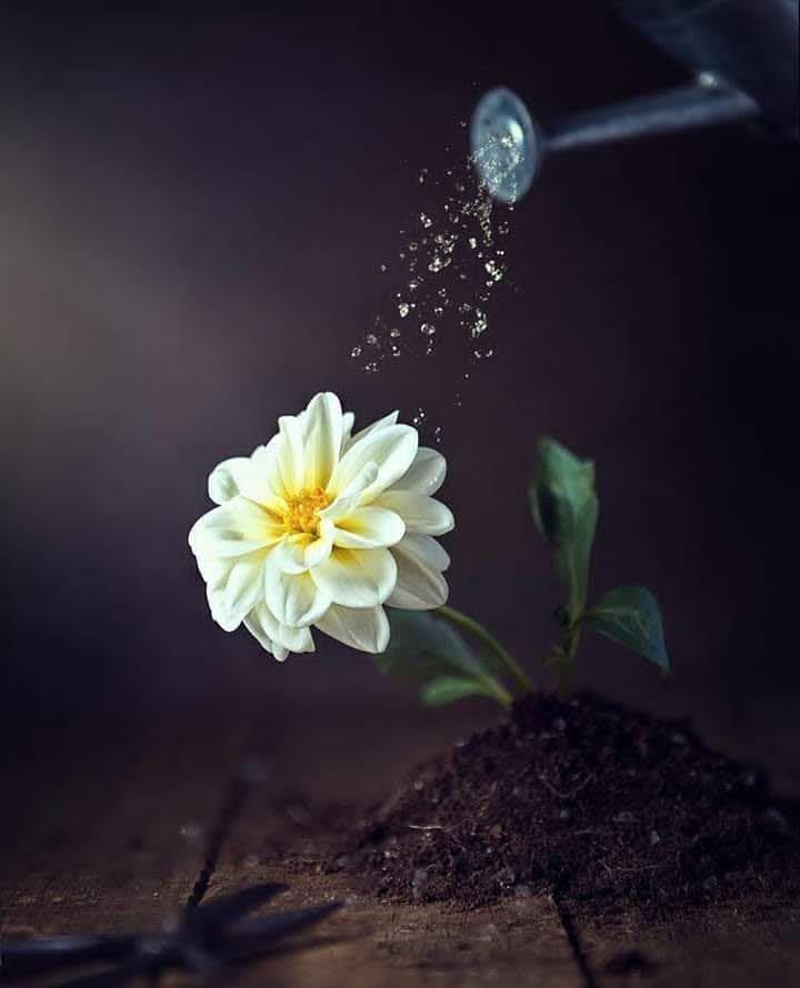 في قلب كل إنسان نبتة صالحة Img_2139