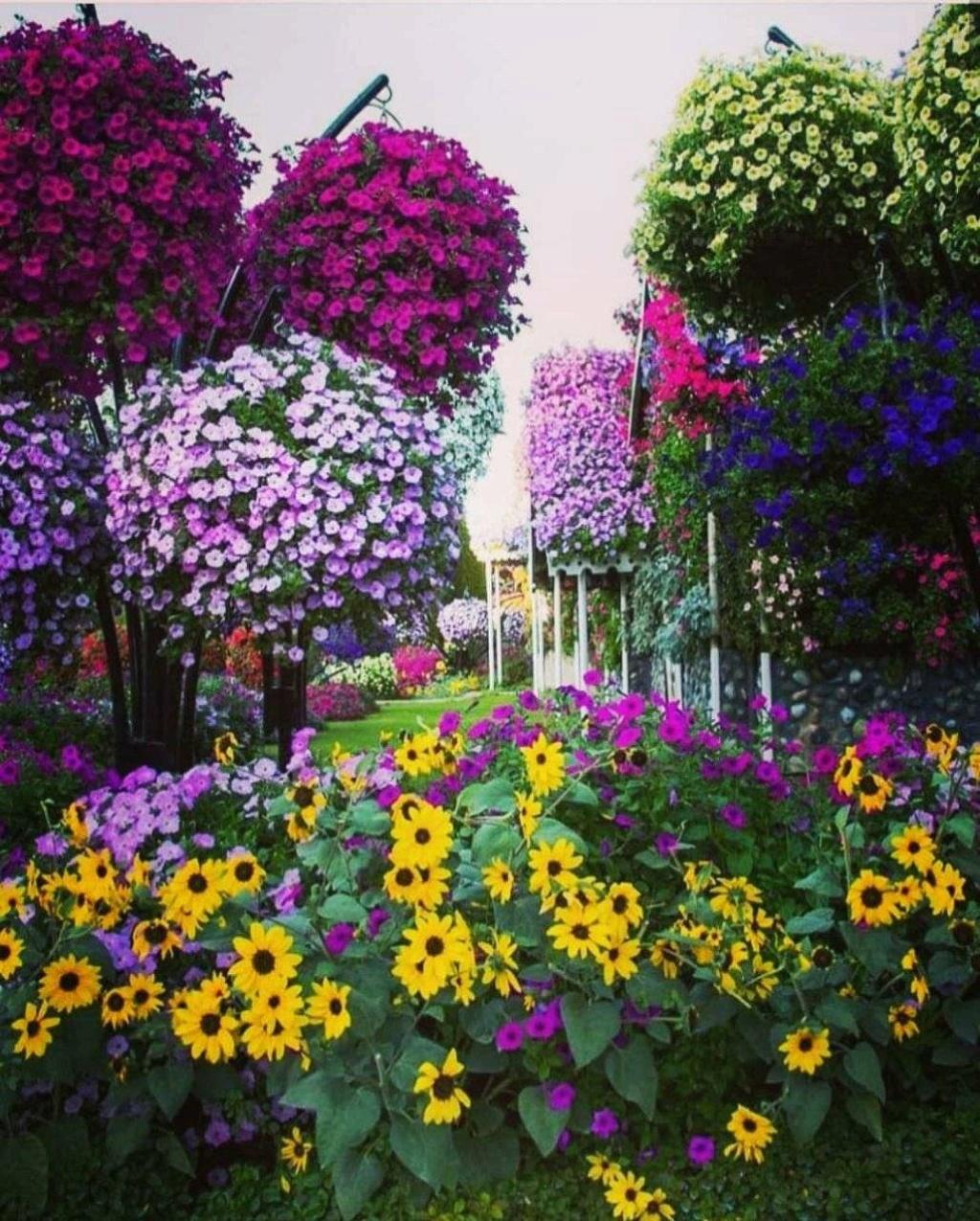 الحياة حديقة فيها كل انواع  الزهور و الورود Img_2282