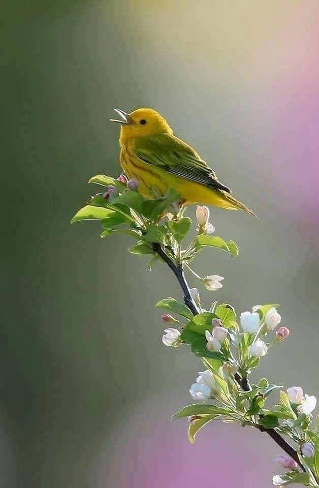 الكلمة الطيبة طائر جميل Img_2299