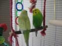 voici mes 2 nouveaux pensionnaires  Img_1613
