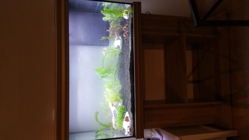 Mon premier aquarium en projet 20160310