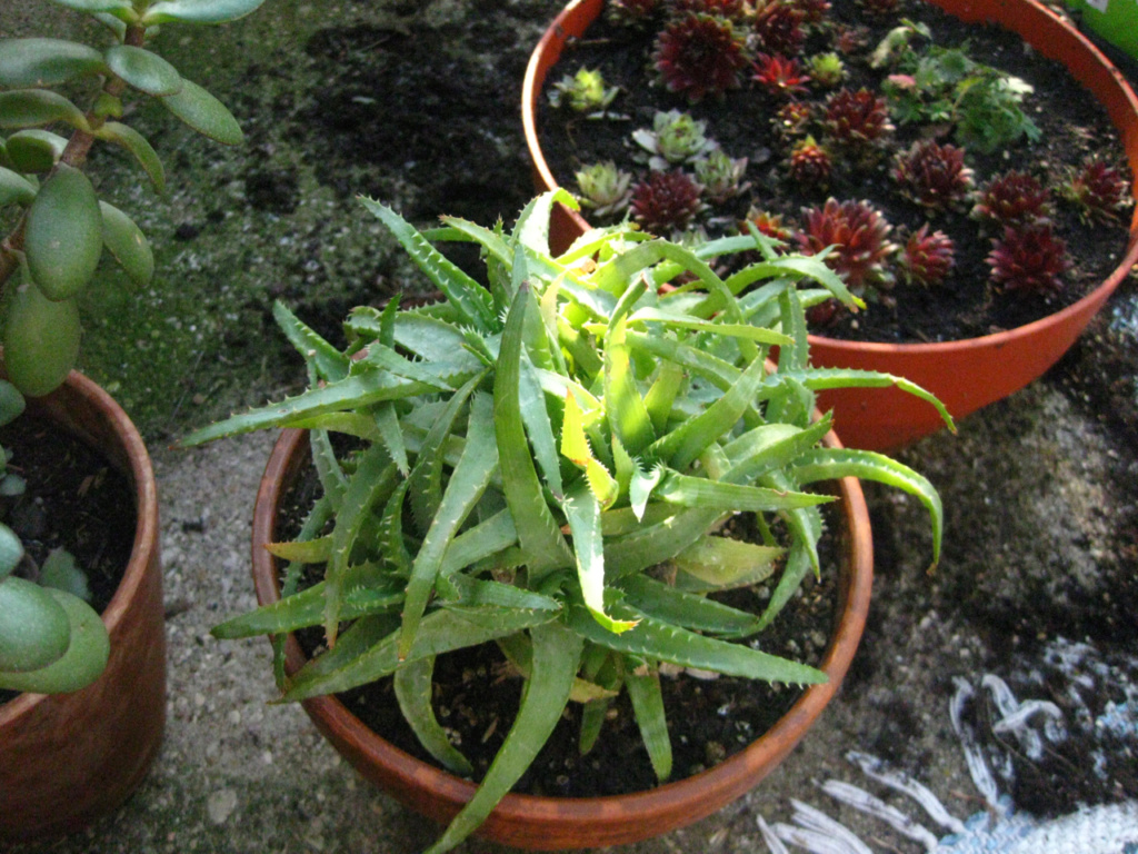 Le jardin - Page 32 Img_0125