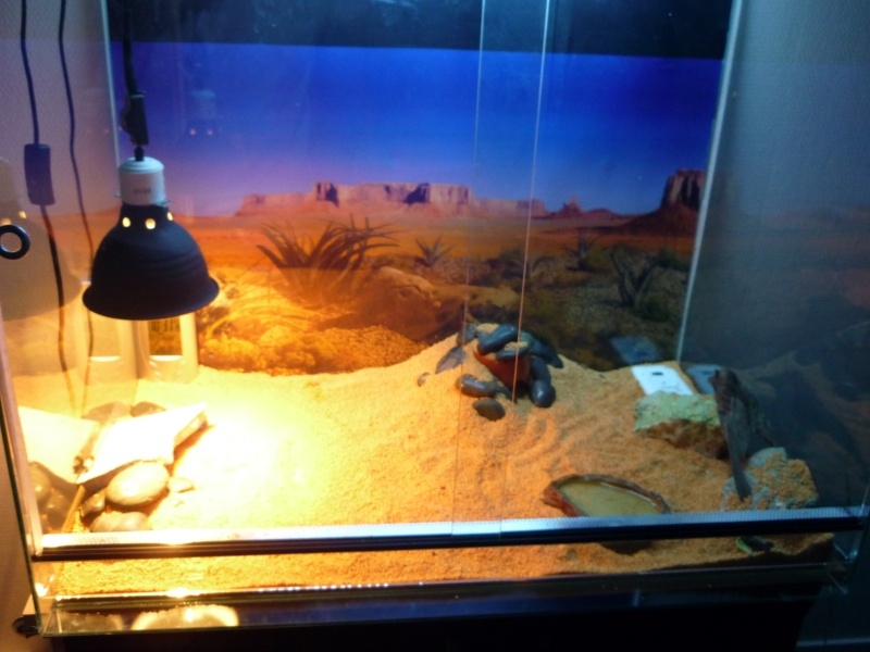 Terra Eragon en photo (enfin) P1010012