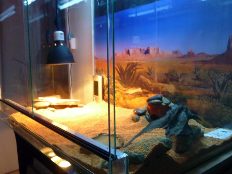 Terra Eragon en photo (enfin) P1010018