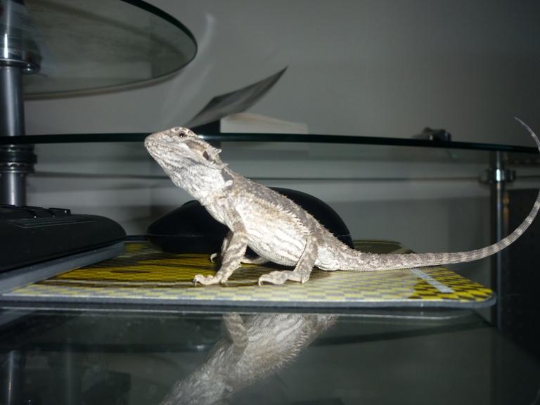 Terra Eragon en photo (enfin) P1010020