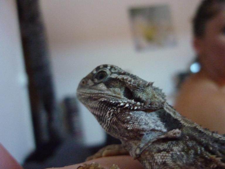 Terra Eragon en photo (enfin) P1010112