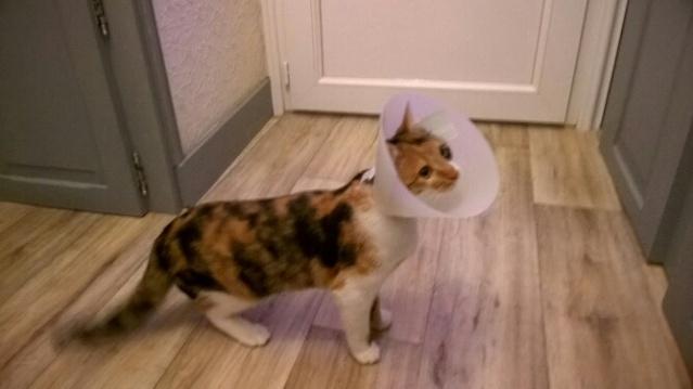 Lady, petite puce née début septembre, en accueil sur Niort (79)5, Wp_20111