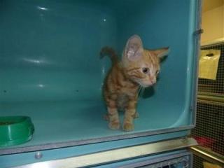 sauvetage de chats, Animain met la main à la patte 3077010
