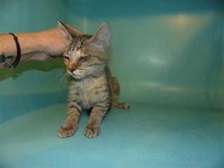 sauvetage de chats, Animain met la main à la patte 3104910