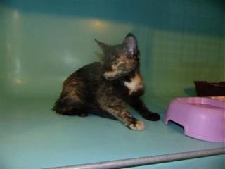 sauvetage de chats, Animain met la main à la patte 3105010
