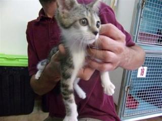 sauvetage de chats, Animain met la main à la patte 5338210