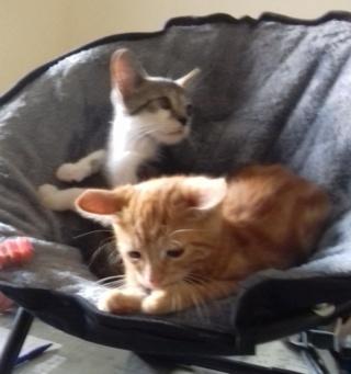 sauvetage de chats, Animain met la main à la patte Carfie12