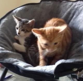 sauvetage de chats, Animain met la main à la patte Carfie13