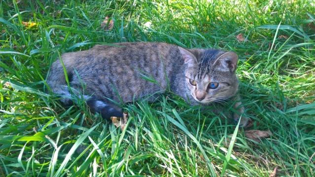 Orphée, petite tigrée qui joue avec la queue du grand chien...5 mois Img-2023