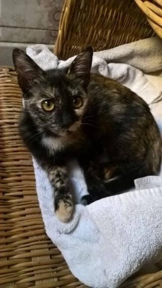 sauvetage de chats, Animain met la main à la patte Img-2025