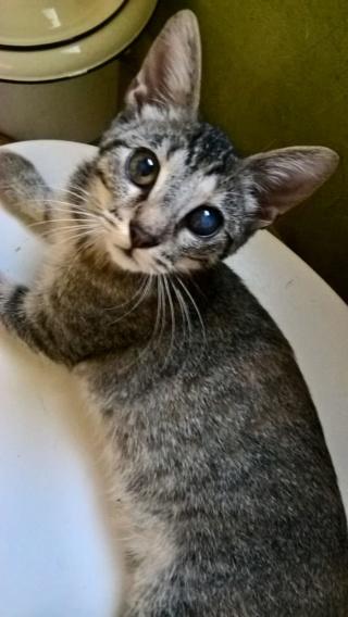 sauvetage de chats, Animain met la main à la patte Img-2026