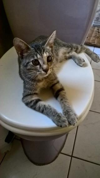 sauvetage de chats, Animain met la main à la patte Img-2027