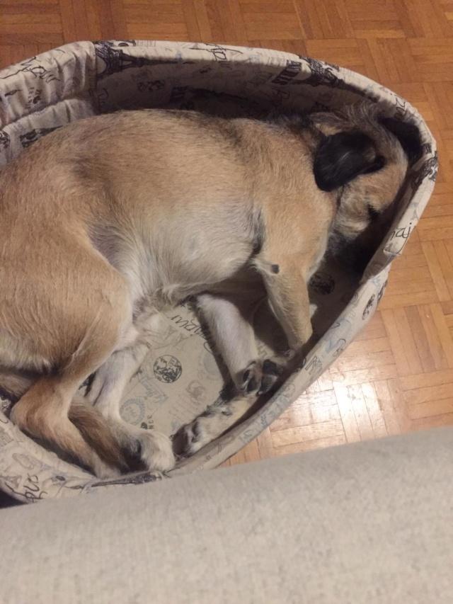STEFANO dit FANO, croisé berger, né en juin 2013, 26kg Img-2033