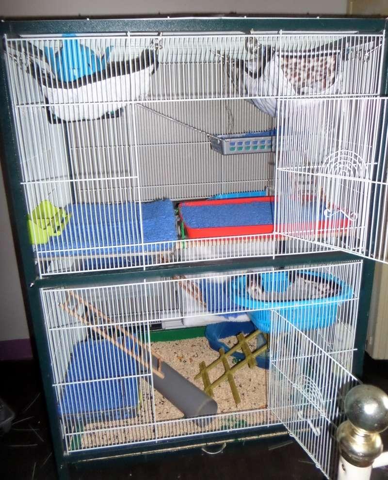Quelles cages choisir pour 2 mâles et 4 femelles Sam_4112