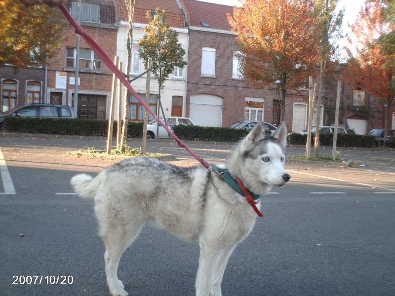 Nos loups grandissent, postez nous vos photos Angie210