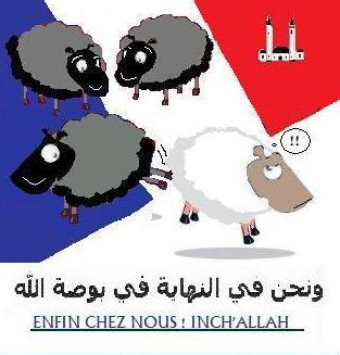 La chance pour la France a encore frappé Mouton11