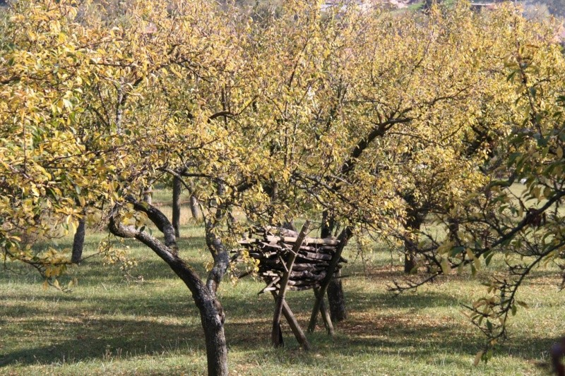Wangen en automne Img_5613