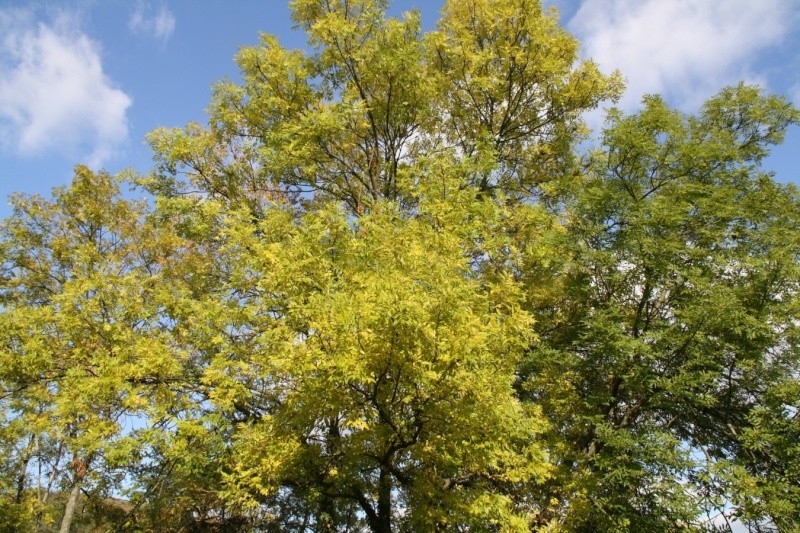 Wangen en automne Img_5614