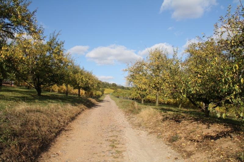 Wangen en automne Img_5619