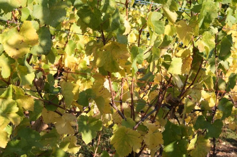 Wangen en automne Img_5622