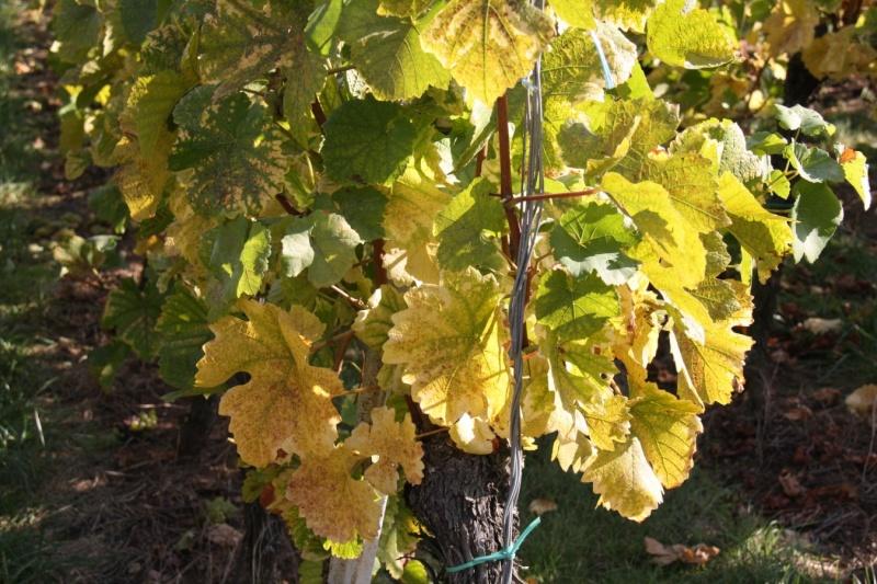 Wangen en automne Img_5623