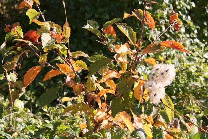 Wangen en automne Img_5626