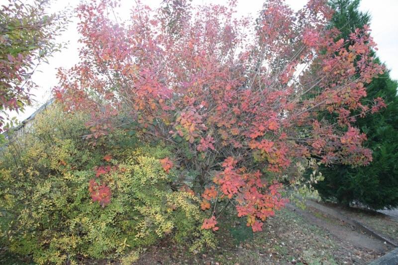 Wangen en automne Img_5629