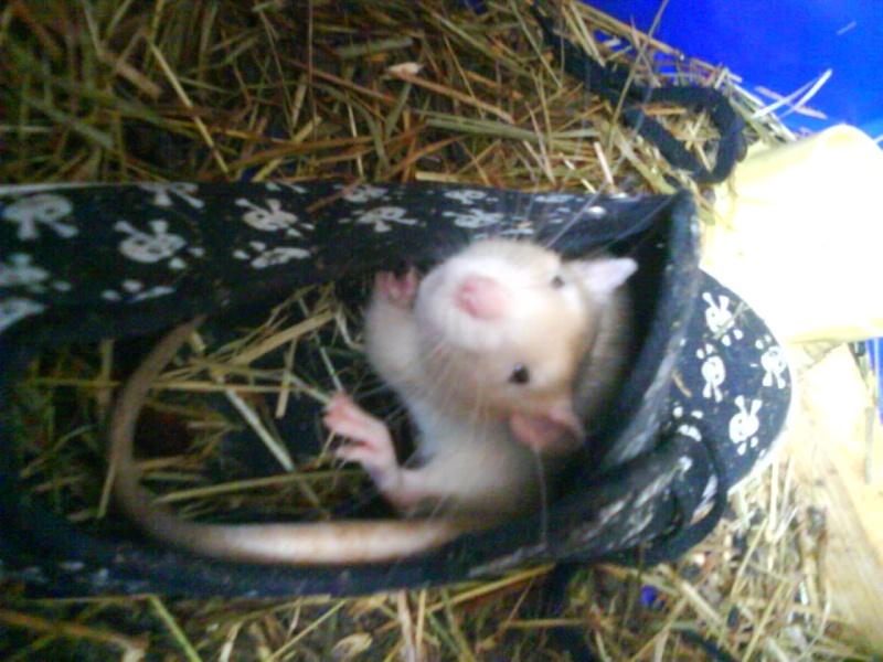 Mes ratous et ratounes Dsc01410