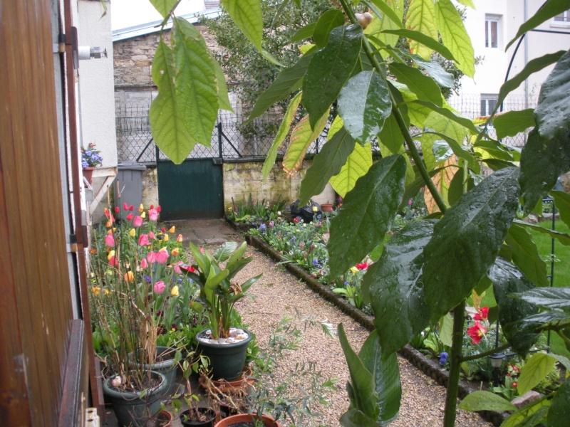 Restauration de jardin Allema13