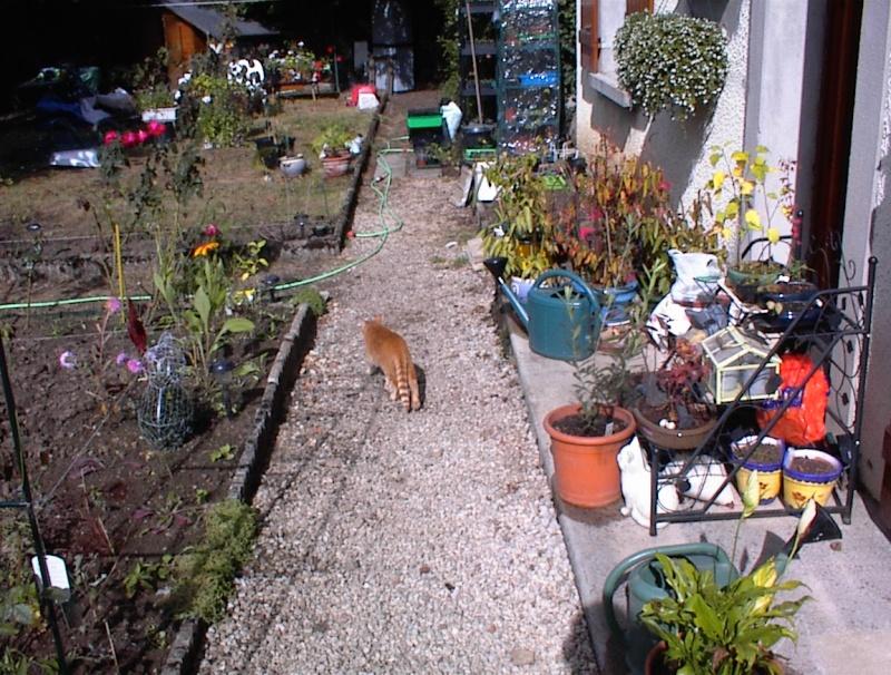 Restauration de jardin Dsc00019